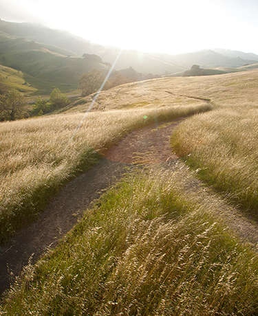 Your Path to New Health at Statera Chiropractic